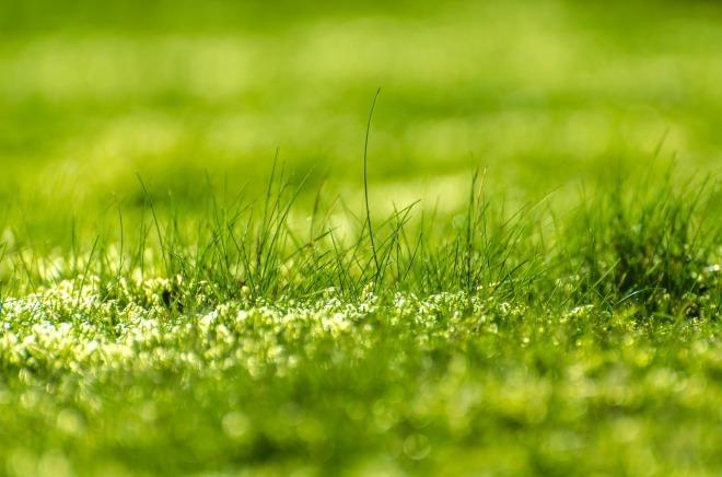 green-315215_1280